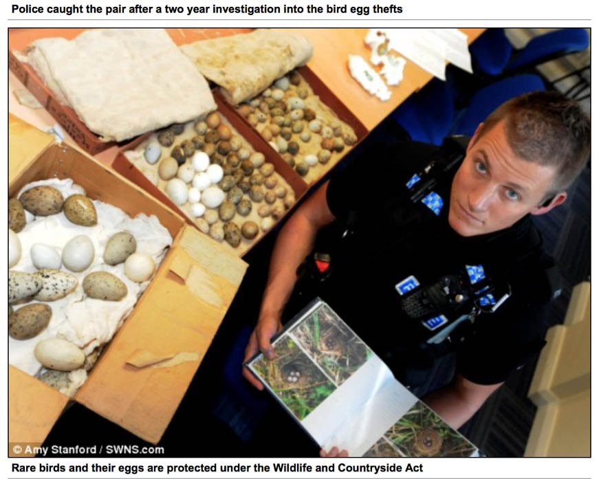 Image of a Police seize of unlawful collection of rare bird eggs in Dartford, Devon 2012