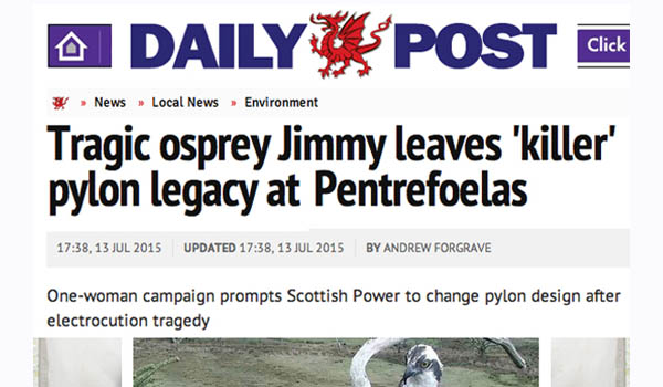 Daily Post Article Image entitled 'Tragic Osprey Leaves Killer Pylon Legacy'