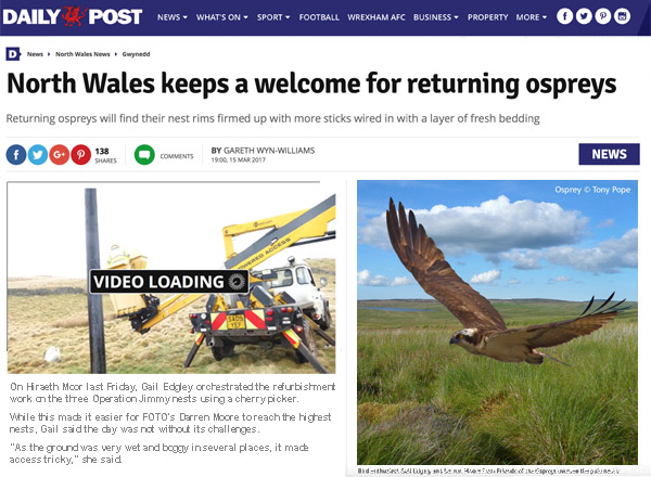 Daily Post online page shows the article and a short movie giving the opportunity to watch one of the Osprey Pole Nests being refurbished
