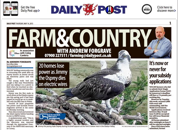 Daily Post Article - Rare Osprey Electrocuted