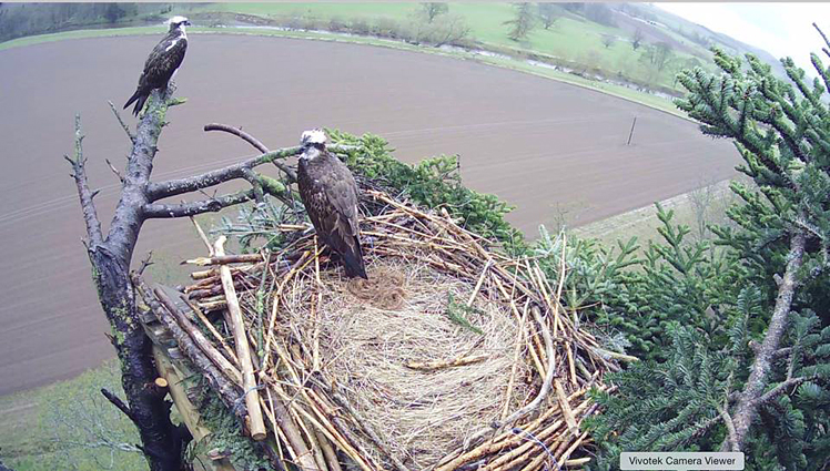 image of the new refurbished nest which was engineered at the same time as the Scottish Power work
