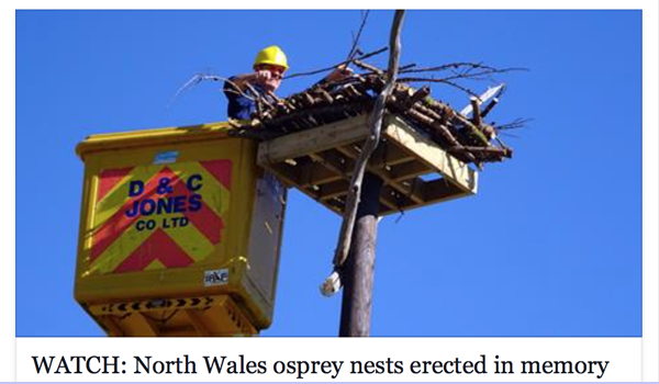 Scottish Power, D&C Jones and Friends of the Ospreys in action with a pole nest